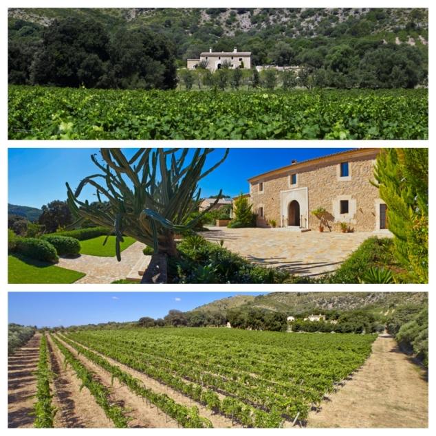 Weingut Finca Hochzeit Mallorca